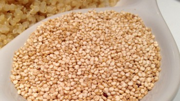 facts about grains of quinoa