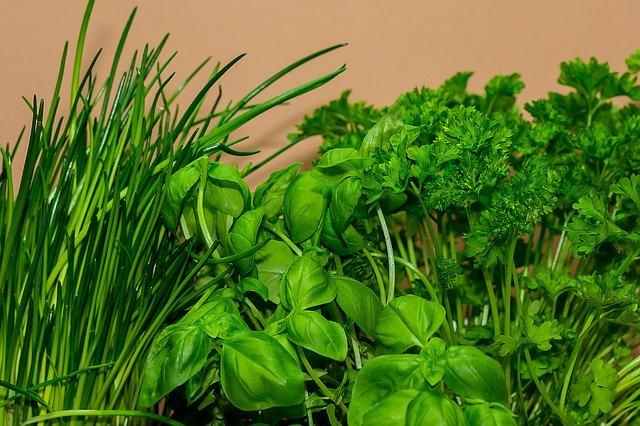 Herbs Culinary